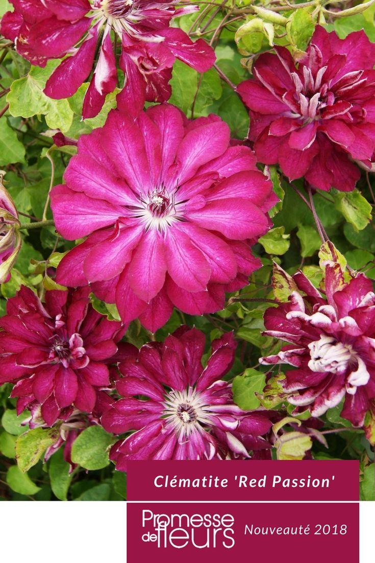 Les 25 meilleures id es de la cat gorie promesses de fleurs sur pinterest jardin belv d re - Plantes vivaces fleuries toute l annee ...
