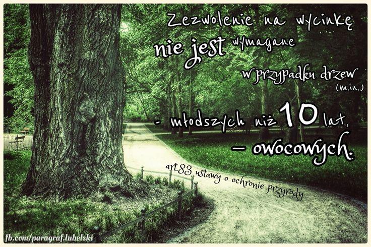 Zezwolenie na wycinkę drzew adwokat Grzegorz Sarzyński  Tarnobrzeg ul. Sienkiewicza 55 tel. 662 742 432  Sandomierz Stalowa Wola Nisko Mielec Nowa Dęba Opatów