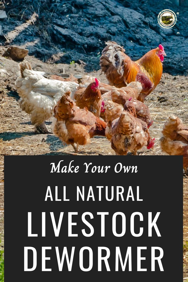 How to make your own natural herbal dewormer for livestock