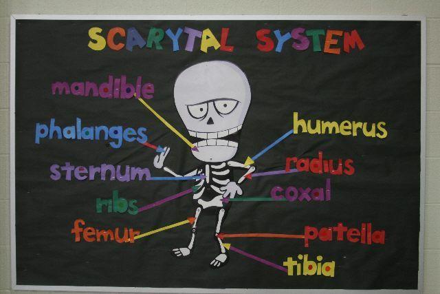 skeleton display