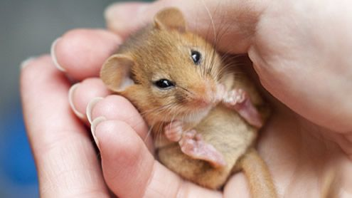 ... more about one of the region's most secretive animals, the dormouse