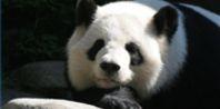 Kindergarten Panda Activities | eHow.com