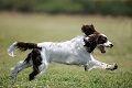 Chiropraktik für (Sport-) Hunde & Pferde