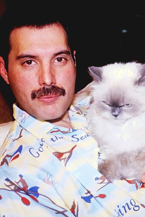 Freddie and a cat with the most evil look