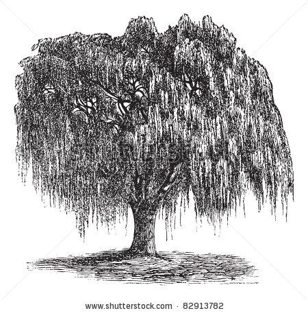 Weeping Willow Tree Black And White Tattoo 25+ best Willow...