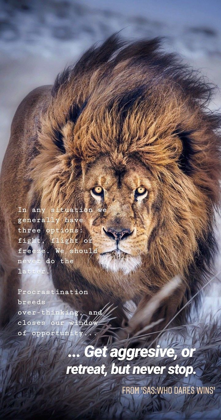 Sas Who Dares Wins Quote By Alessandraminko Fitness British Army Winning Lion Pictures Lion Images Wild Animal Wallpaper