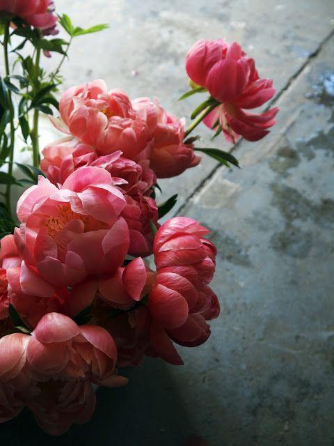 Den rosafargen