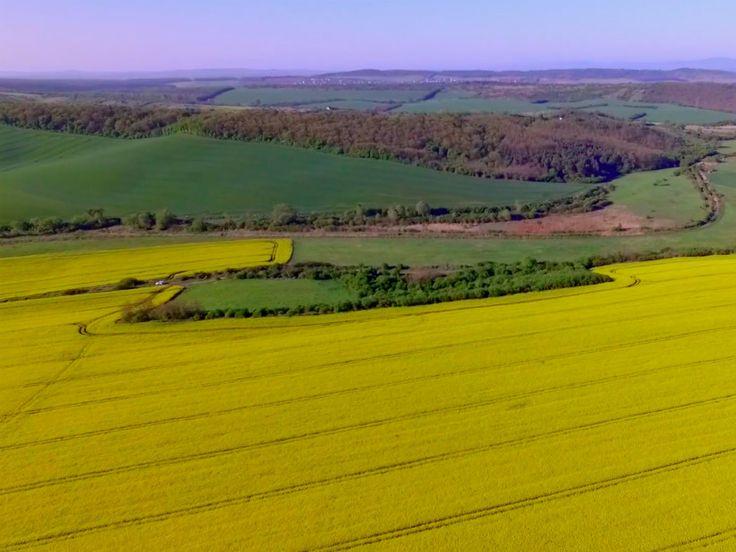 Ilyen amikor sárgába borul Dunakanyar (drón videó)