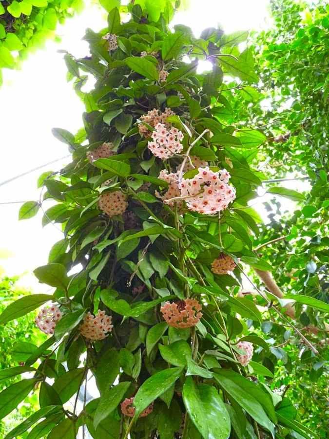Die 220 Besten Bilder Zu Flores Auf Pinterest | Blume, Mohnblumen ... Pflegetipps Hangende Zimmerpflanzen Raume Einfach Begrunen