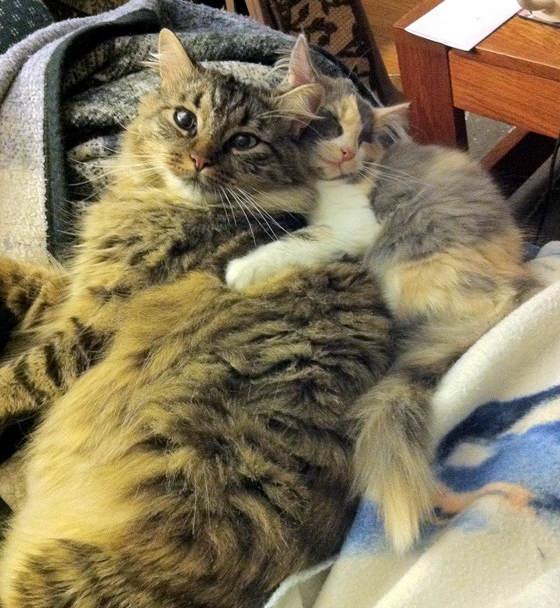 Even a kitten can appreciate--soft!