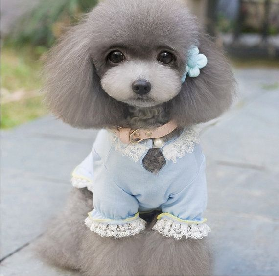 316 best Poodles images on Pinterest