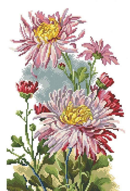 Rośliny - Różowa Chryzantema