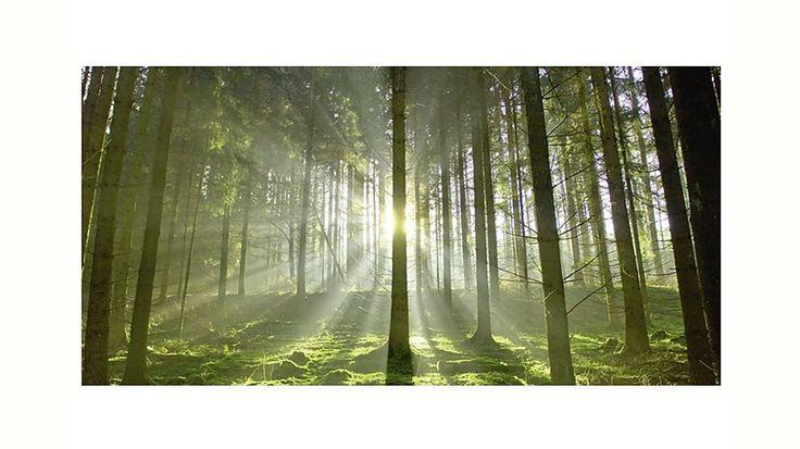 Home affaire, Glasbild, »Wald im Gegenlicht«, 100/50 cm Jetzt bestellen unter: https://moebel.ladendirekt.de/dekoration/bilder-und-rahmen/bilder/?uid=0c9025e0-6d8d-5967-802b-2aa3fda96fd4&utm_source=pinterest&utm_medium=pin&utm_campaign=boards #bilder #rahmen #dekoration