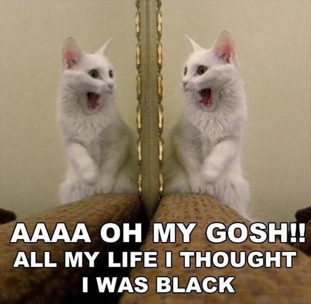 Funny White Cat Meme : Funny cat memes rule find more cats here http