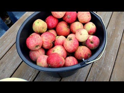 Sok jabłkowy (pasteryzacja w minimalnej potrzebnej temp.) - YouTube
