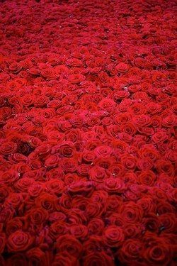 red roses - the amount over time that Derrick gave Julia