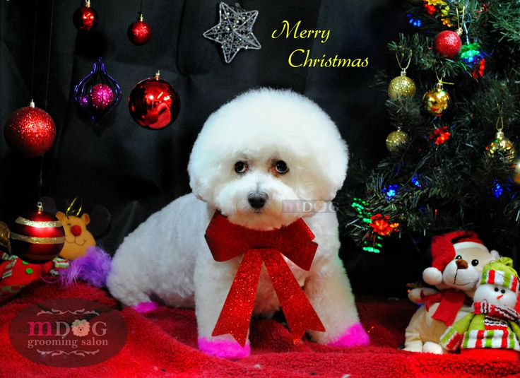 Merry Christmas Daisy!