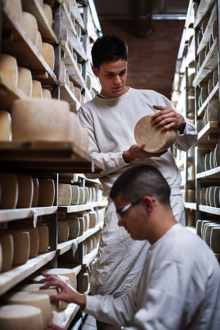 Affinamento dei formaggi in caseificio