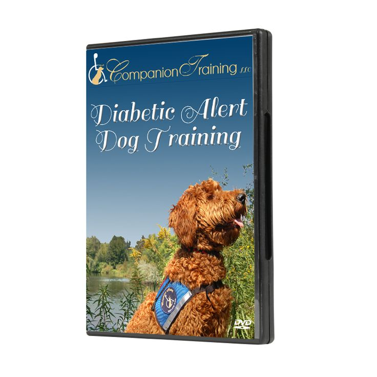 Diabetic alert dog training