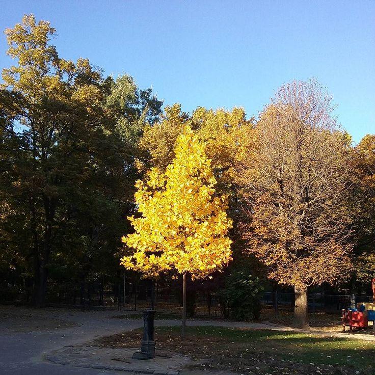 Városmajori játszótér -  #Városmajor #ősz via Instagram http://ift.tt/1jDXzBH  Városmajori játszótér via Őri András