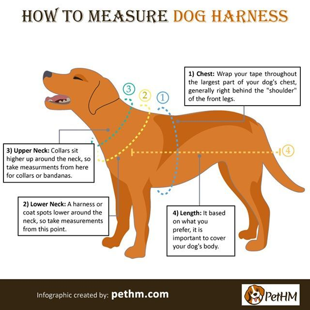 How To Measure Dog Harness It Is The Most Common Question Is What