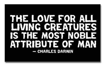 C. Darwin