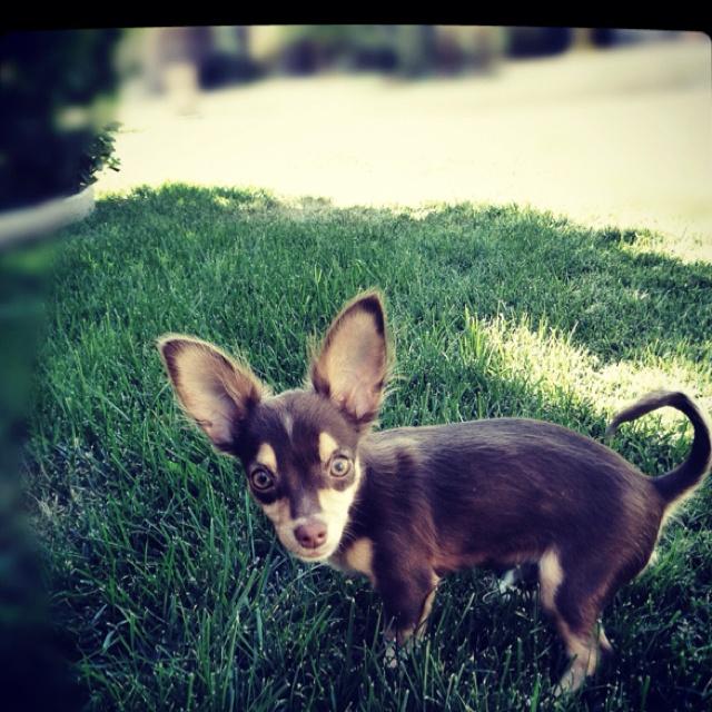 the pup: Pup, Fun