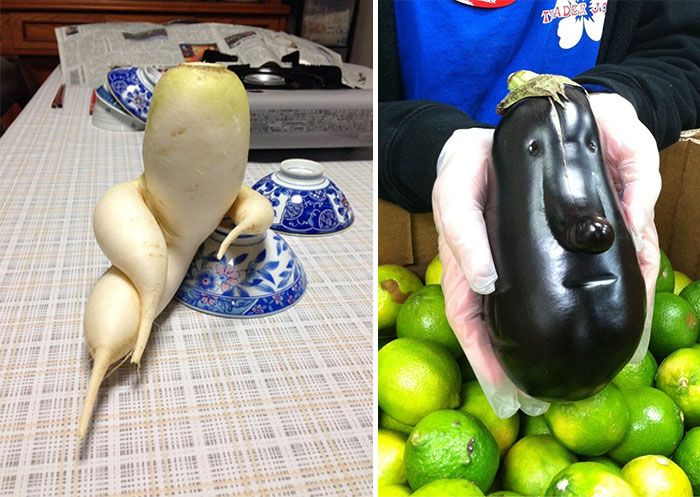 Best Funny Looking Vegetables Images On Pinterest Fruit - 20 funny fruits and vegetables looking exactly like something else