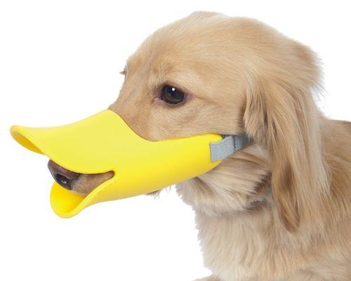 Oppo Dog Muzzle Quack | Dog muzzle, Dogs, Pet dogs