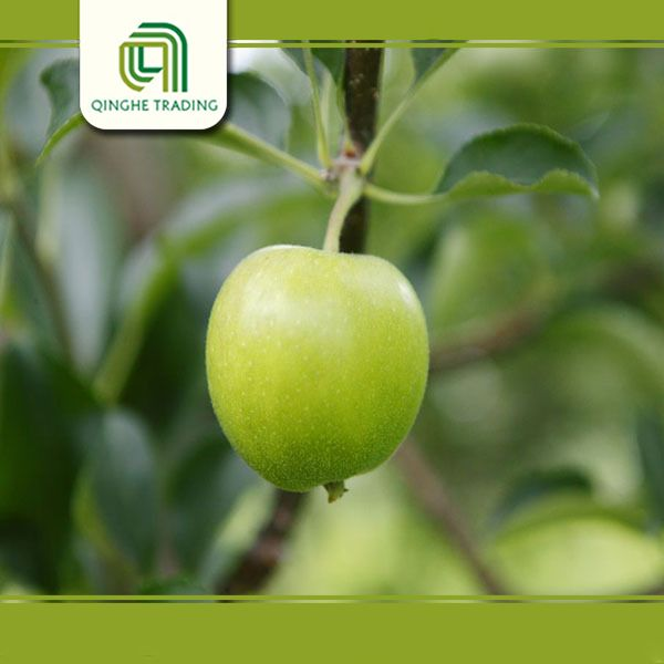 Hot selling fresh gala with low price cheap stock gala apples