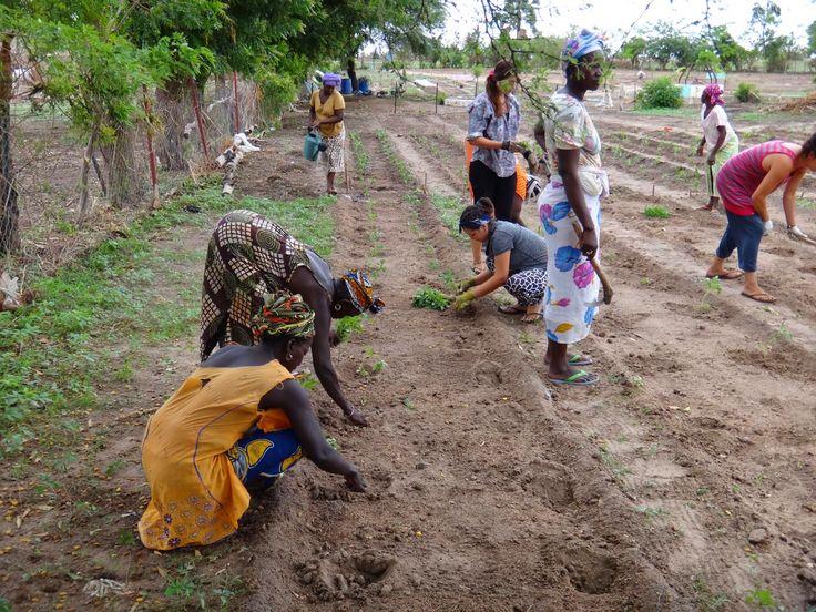 Tisser des liens au Sénégal. Des Carrefouristes du programme Québec Sans Frontières (QSF) on rédigé ce billet lors de leur séjour à Gapakh, au Sénégal, plus tôt cet été.