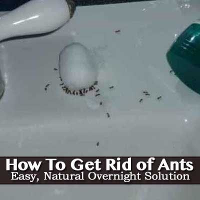 How To Get Rid Of Ants - Easy, Natural, Overnight Solution