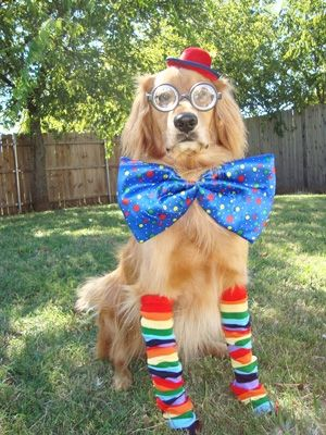 39 best Dogs in Costumes images on Pinterest | Doggies ...
