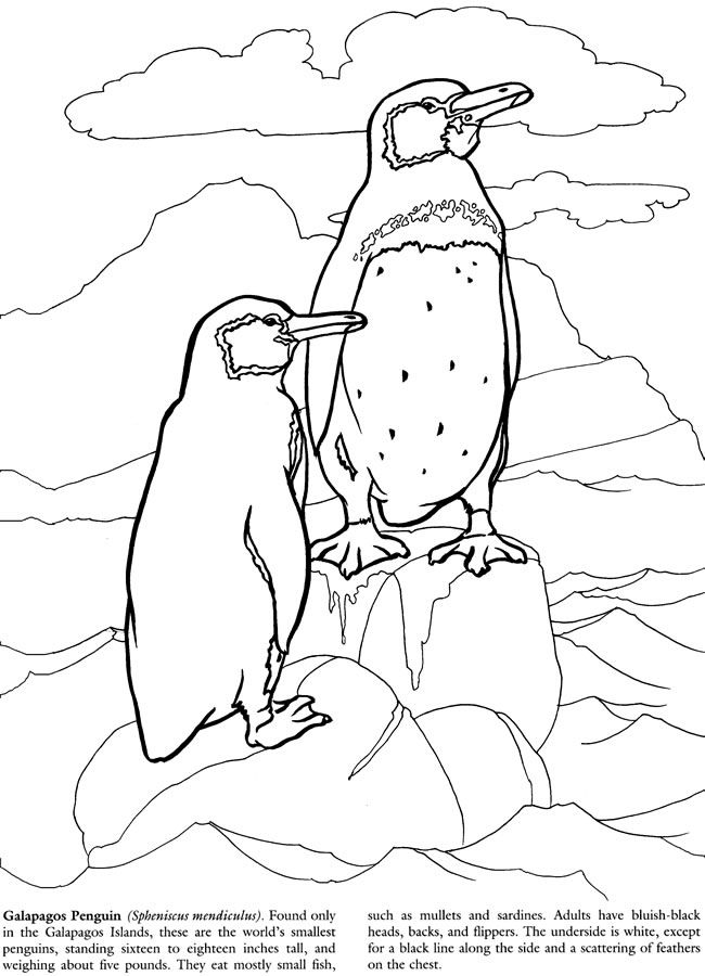 Galapagos Islands Coloring Book