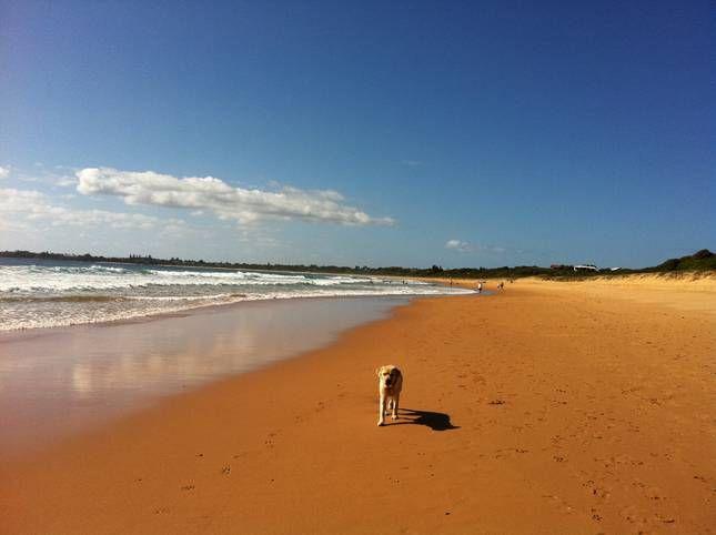 Escape@Culburra   Culburra Beach, NSW   Accommodation. 2014 National Pet-Friendly Award Winner. From $450 per night. Sleeps 8. #pet-friendly