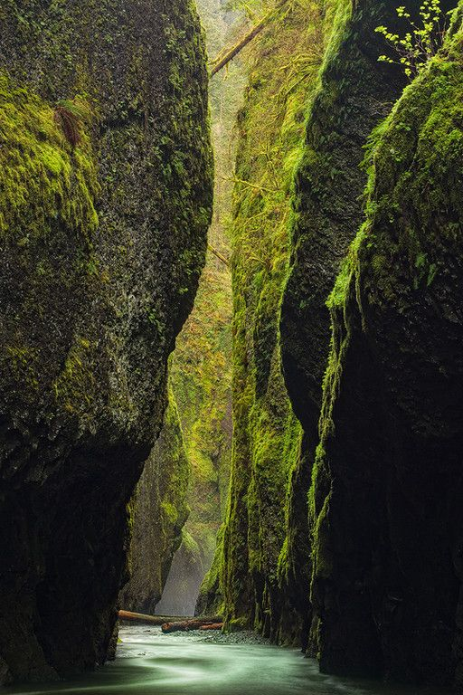 """""""Canyon Oasis"""" The incredibly lush and wet Oneonta Canyon, Columbia River Gorge, Oregon."""