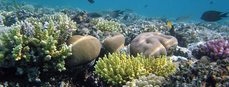 Snorkel Puerto Morelos   $84 for 3-hr excursion