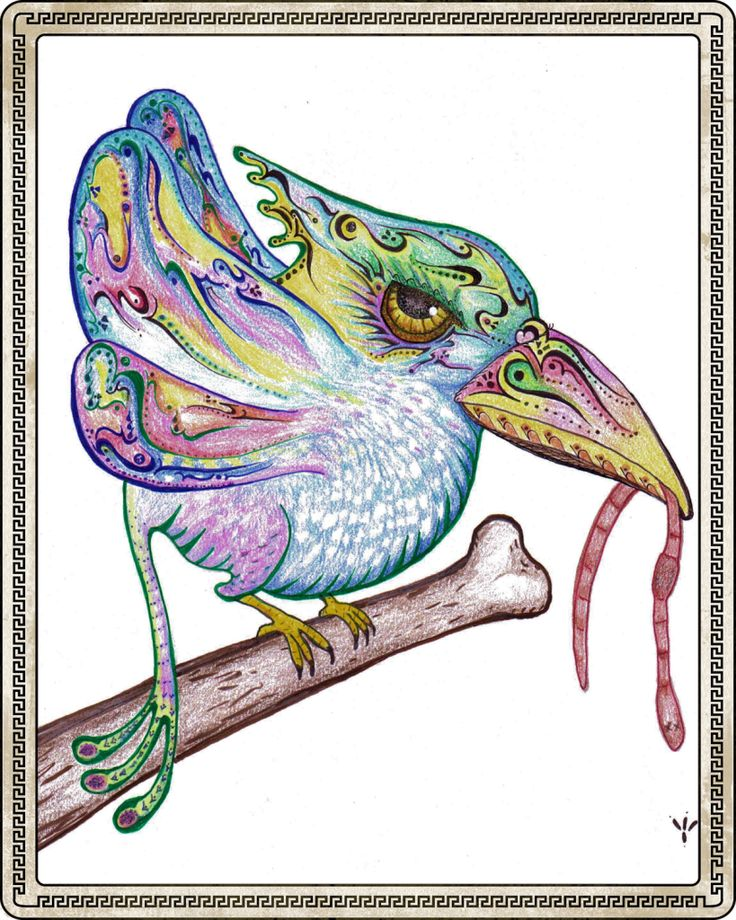 Rare Lace Winged Early Bird , created with colored pencil, a delicious part of my balanced ART-Tillery!