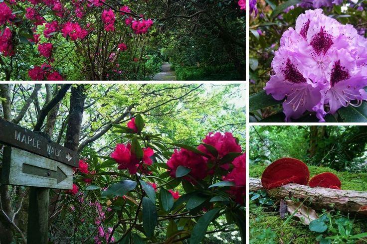 Pirianda Gardens, Olinda. Dandenong Ranges, Australia