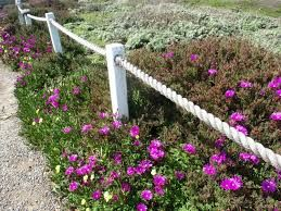 25 Best Ideas About Rope Fence On Pinterest Garden