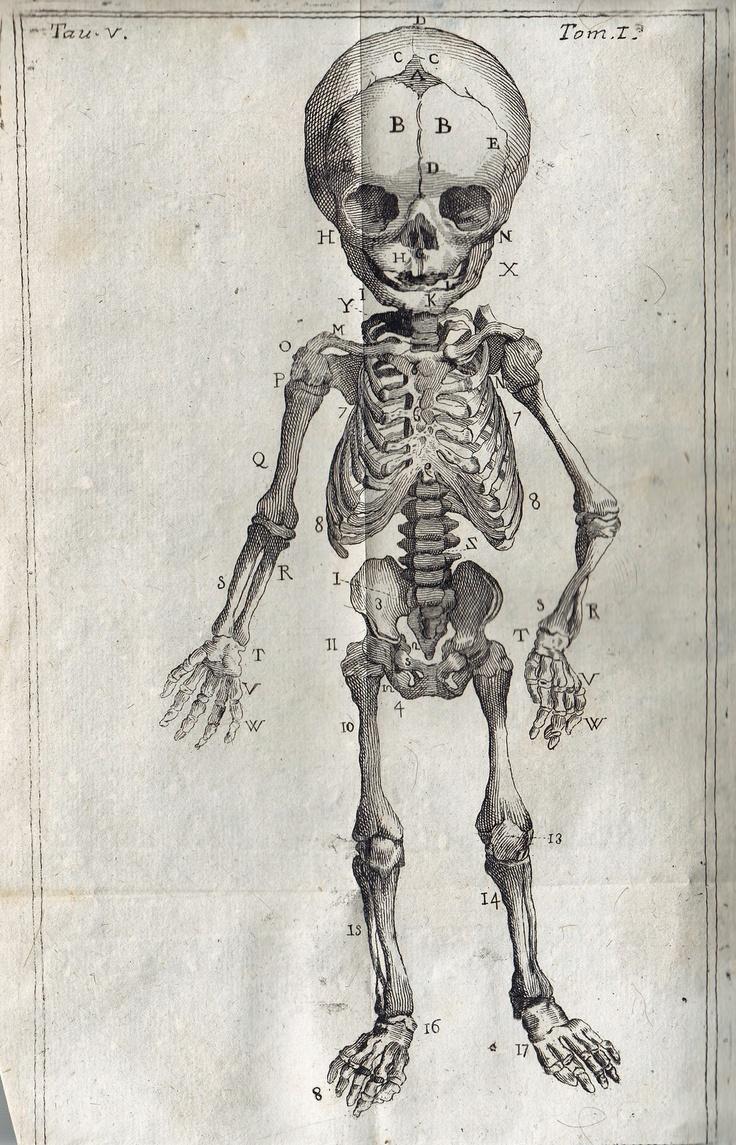 101 best The Art of Anatomy images on Pinterest | Skeletons, Anatomy ...