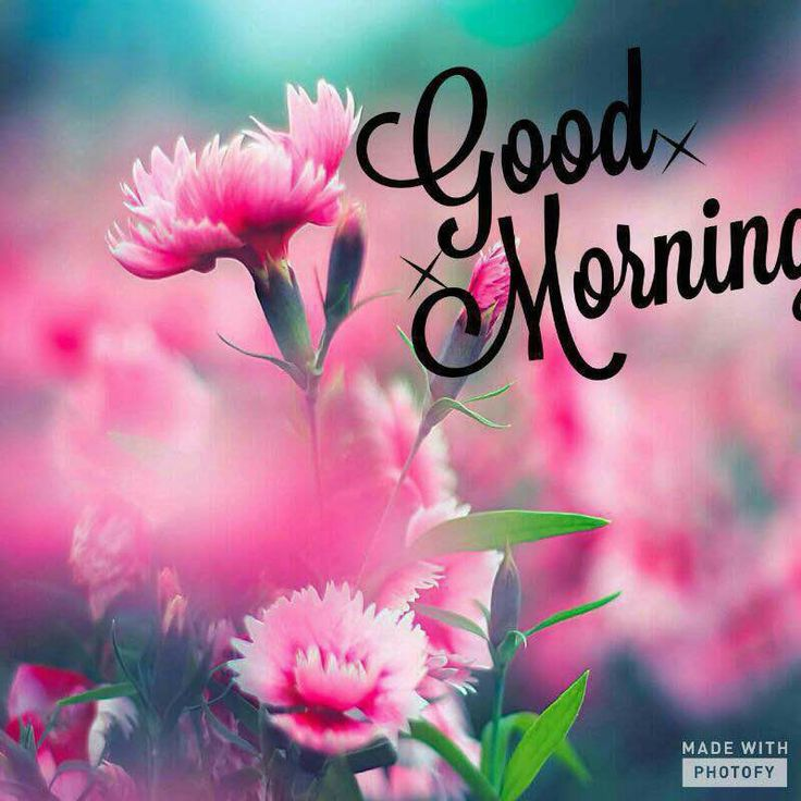 Good Morning Have A Nice Day Pics Photos Images Quotes Wishes Wallpaper For Wh