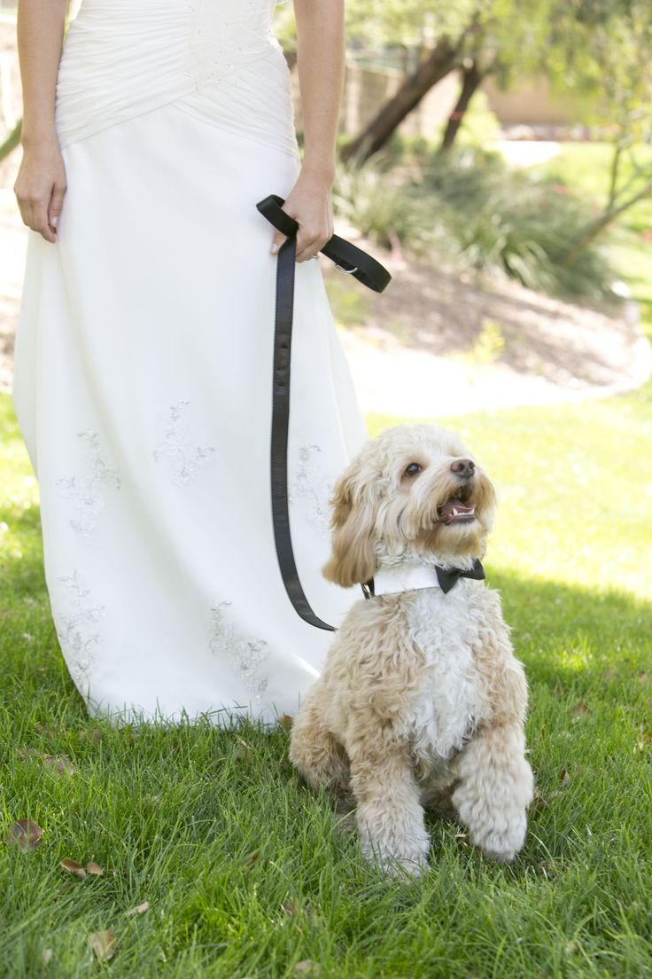 PetSmart's Martha Stewart Pets® Wedding Dog Leash features classic, durable, faux satin webbing. The leash is lightweight, quick-drying and stylish. With Martha Stewart Pets, your dog is always fashionable.