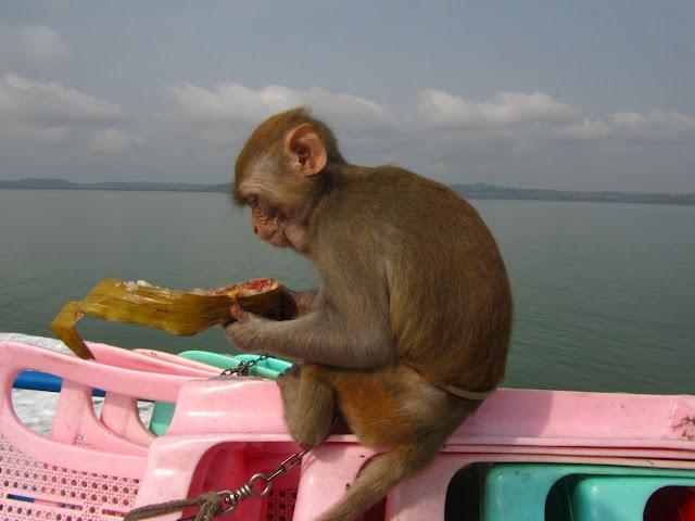 Toungup-Mrauk U by boat !