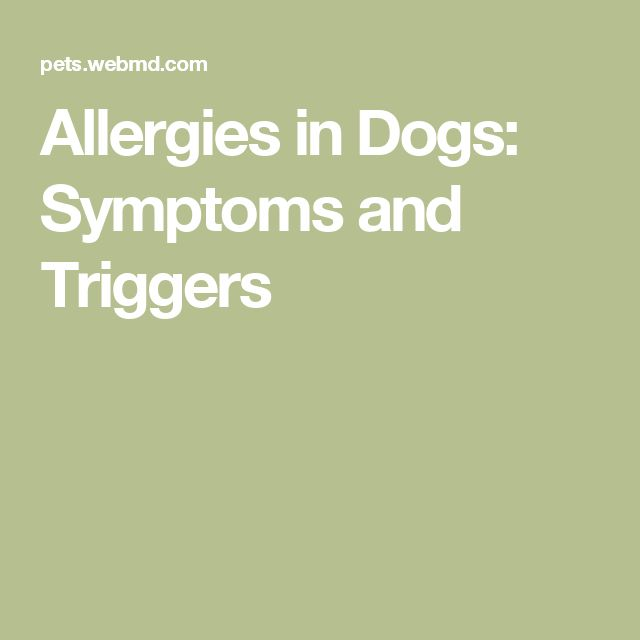17 best ideas about allergies in dogs on pinterest dog