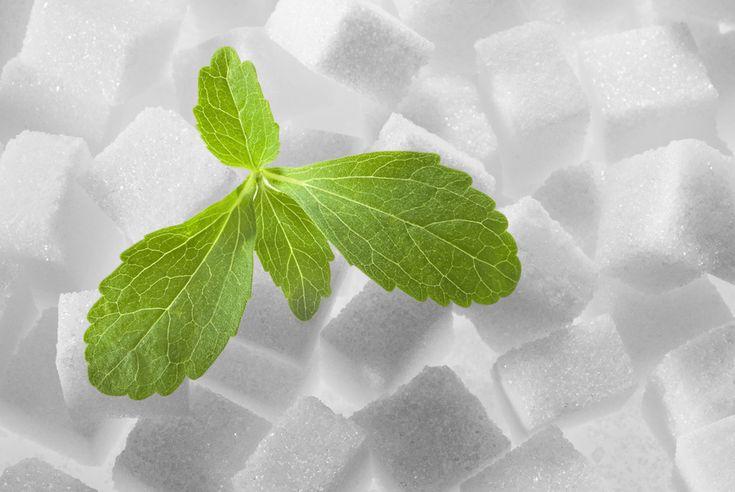 """La stevia. Naturalmente dolce! A Rio De Janeiro si parla del """"miracolo della stevia"""" e dei risultati positivi avuti nei casi di diabete , ipertensione e infezioni varie."""