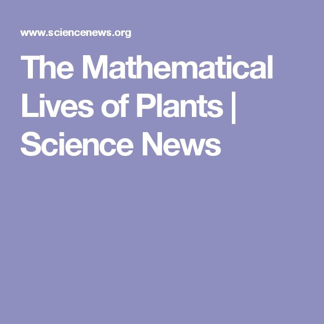 The Mathematical Lives of Plants | Science News