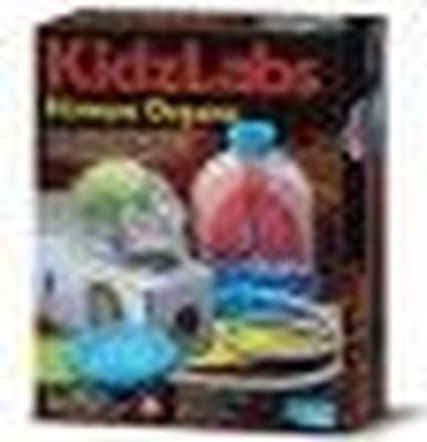 4M Kidz Labs Human Organs | Toys | Buy online in South Africa from Loot.co.za