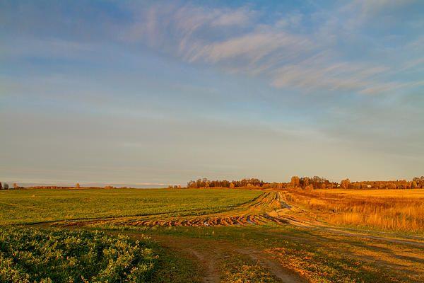 Golden and green autumn fields