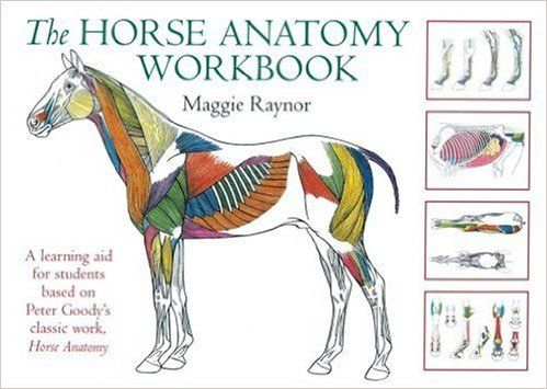 The Horse Anatomy Workbook: A Learning Aid for Students Based on Peter Goody's Classic Work, Horse Anatomy (Allen Student): Maggie Raynor: 9780851319056: Amazon.com: Books